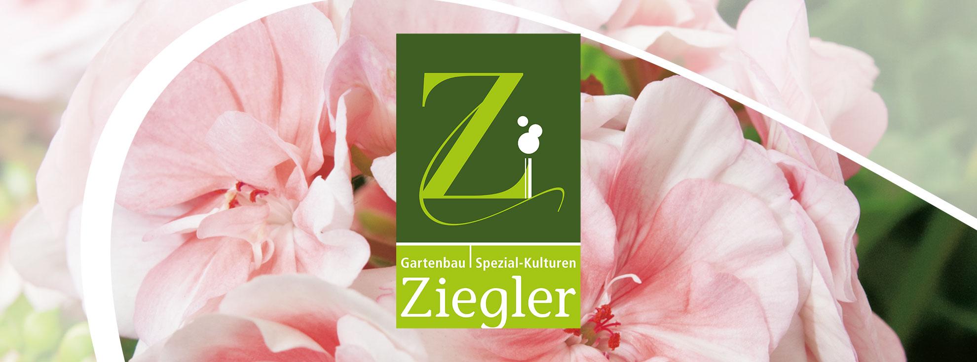 Titelbild Corporate Design für Gartenbau Ziegler